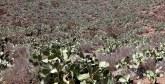 Agriculture urbaine : Un projet pilote  dans le pipe à Tiznit