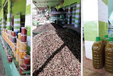 Itinéraire technique d'Al Moutmir à Kelâa des Sraghna : Immersion au cœur de la terre de l'olivier