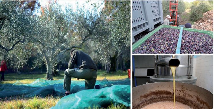 Ouezzane : 14,4 millions DH pour une nouvelle unité de traitement des déchets oléicoles