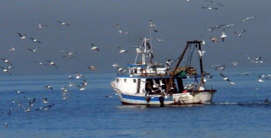 Ressources halieutiques : Sahara, ce «flagship» de la pêche maritime