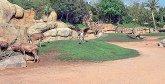 Les travaux de réalisation du zoo d'Ain Sebaa achevés