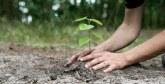 Tiznit lance une opération de plantation d'arbres parallèlement à la COP25