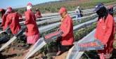 Petits fruits rouges : Les professionnels planchent  à Tanger sur les moyens de développer la filière