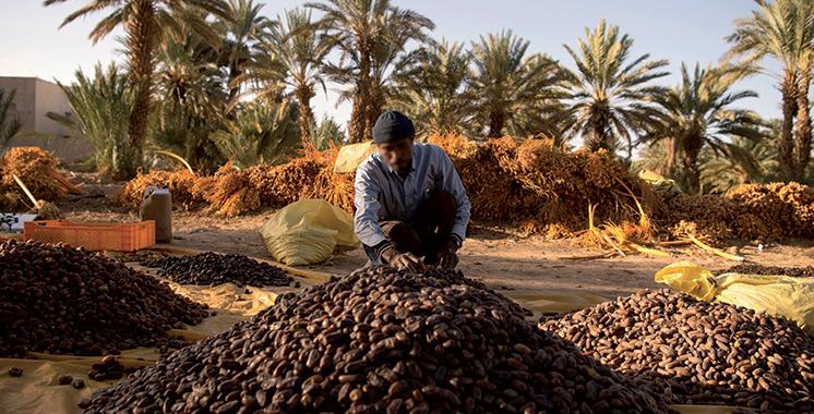 Lutte contre les pertes alimentaires : Un projet pilote lancé dans des zones oasiennes