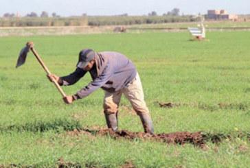 Tanger-Tétouan-Al Hoceima : Le nombre des coopératives agricoles est passé de 325 à 1.300 durant les dix dernières années