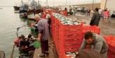 Sidi Ifni : Débarquement de plus de 42.000 t de poissons d'une valeur d'environ 200 millions DH