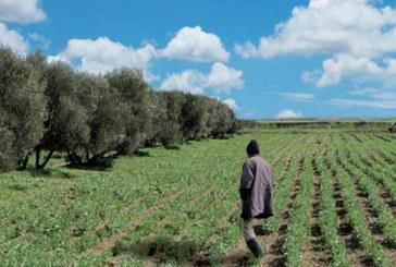 Agriculture solidaire : Une bonne dynamique observée dans l'Oriental