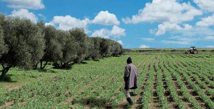 Les prévisions sont rassurantes pour l'ensemble des cultures : Un PIB agricole de plus de 105 milliards de dirhams prévue pour l'actuelle campagne