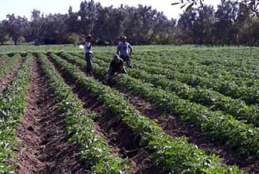 L'agriculture de précision appliquée  à une plate-forme à Essaouira