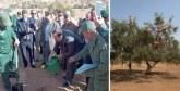Tiznit : 1,5 million DH pour le reboisement  de 100 ha d'arganier