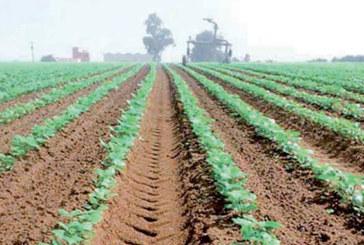 Dakhla-Oued Eddahab : Le secteur agricole, un pourvoyeur d'emplois
