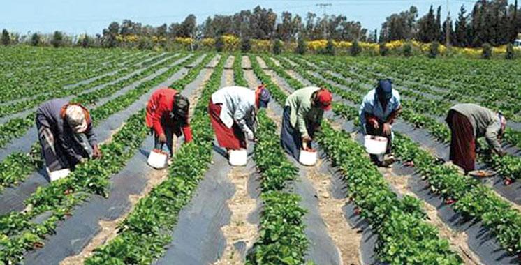 Une production légumière abondante à Casablanca-Settat