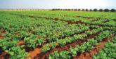 Agriculture: L'impact positif des pluies se fait sentir