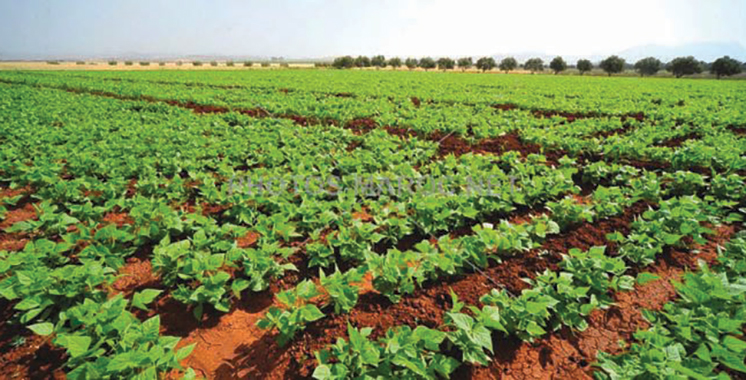 Campagne agricole 2020/2021 : Un programme d'assolement des cultures d'automne mis en place