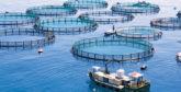 En vertu d'arrêtés conjoints publiés au BO, des sociétés étrangères autorisées à créer des fermes aquacoles à Dakhla