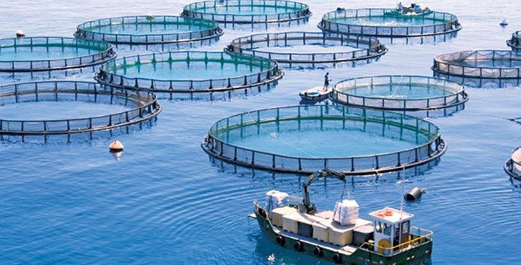 Aquaculture : Agadir Haliopôle Cluster accompagne les start-up innovantes