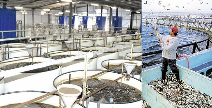 Source prometteuse d'emploi : La Chambre des pêches maritimes de l'Atlantique Sud lance 56 projets aquacoles au profit des jeunes