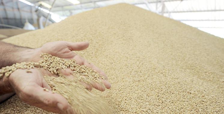 Céréales : Une production prévisionnelle de 98 millions de quintaux en 2021