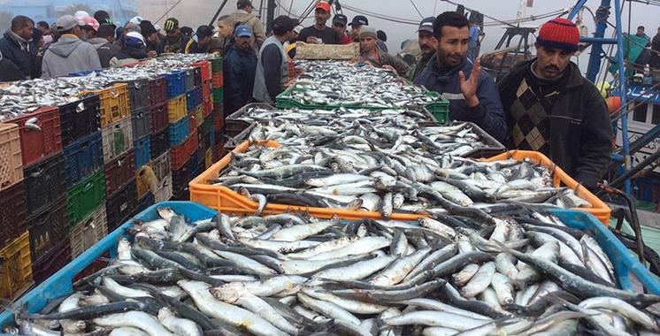 Dakhla : La valeur des débarquements de poissons atteint  plus de 2,25 MMDH en 2019