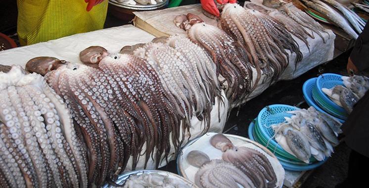 Pêche au poulpe : La saison estivale s'ouvre le 16 juin