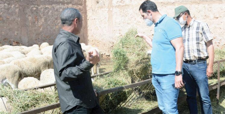 Conjuguer mouton et Covid