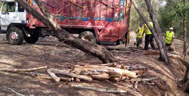 Vidéo de coupe du bois dans la forêt Ain Lahouala : Les explications des Eaux et Forêts