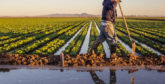 Casablanca-Settat : Le programme agricole réalisé à 100%