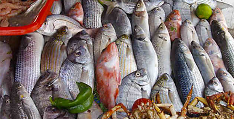Le marché de gros aux poissons de Sidi Ifni rouvre ses portes