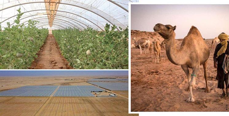 L'agriculture, véritable secteur florissant dans la région Dakhla Oued-Eddahab