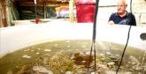 Aquaculture : ProTerra fera de Dakhla un leader mondial dans la production du tilapia et l'agriculture saline