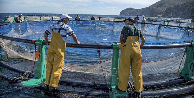 L'ANDA vient de lancer un appel d'offres: Une nouvelle stratégie aquacole à l'étude