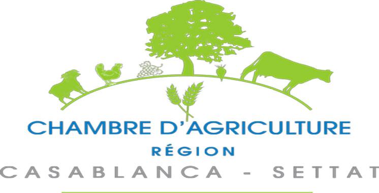Casablanca-Settat : La Chambre d'agriculture examine  le déroulement de la campagne agricole
