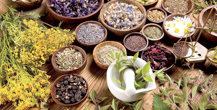 Recherche scientifique / Plantes médicinales : Un financement de 9 MDH pour 15 projets retenus