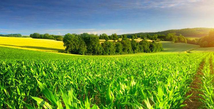 Durabilité du secteur horticole : La FAO et la BERD appuient le Maroc  dans son élan