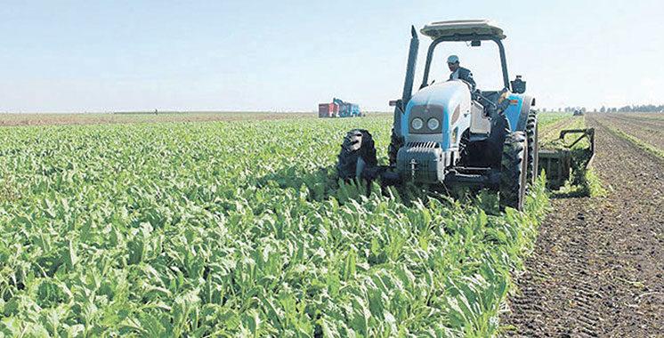 Province de Guercif «Al Jayl Al Akhdar» vise à doubler  le PIB agricole à l'horizon 2030