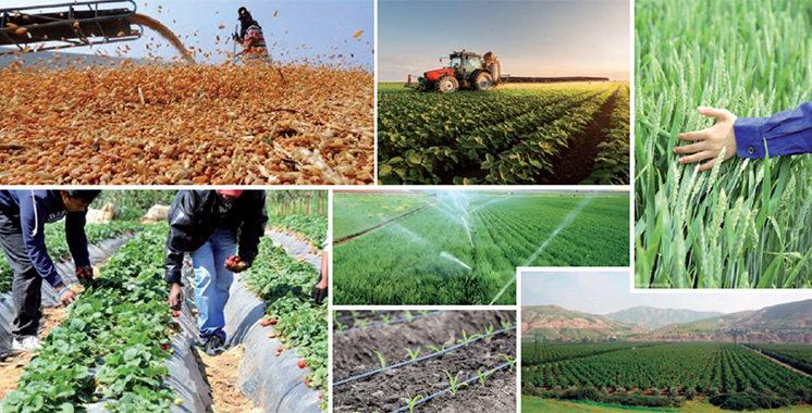 Plan Maroc Vert : Une moisson exceptionnelle