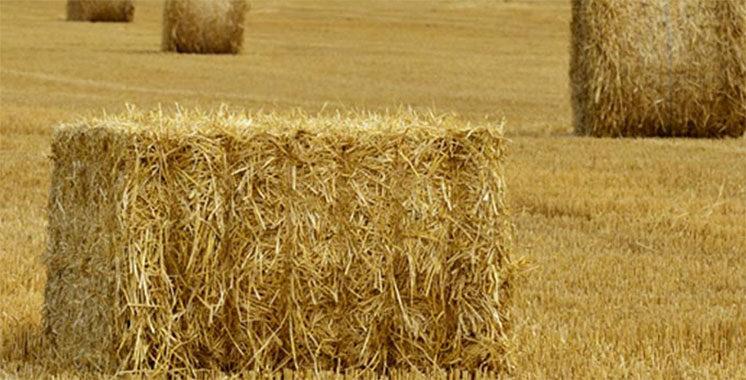 Laâyoune-Sakia El Hamra : 170.800 Qtx de fourrages subventionnés distribués aux agriculteurs
