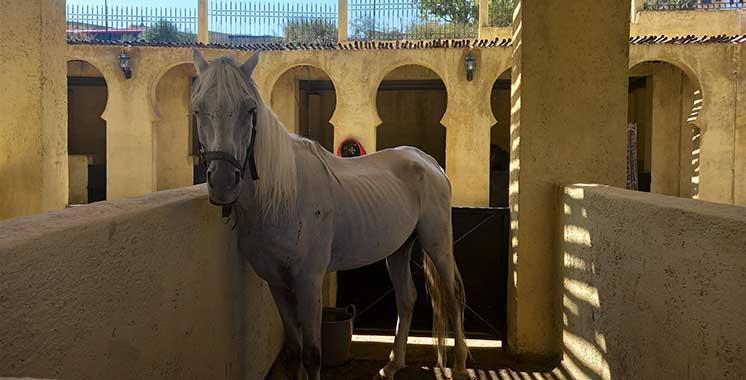 Fès : Les ânes et les mulets ont enfin leur hôtel