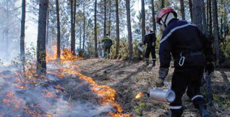 2.782 ha de forêts ravagés en 9 mois