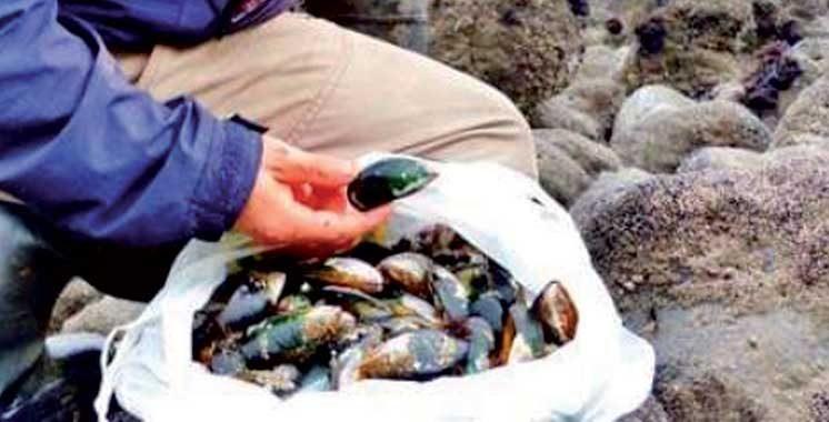 Targha-Chmaâla (région Tétouan/Chefchaouen) : Interdiction de la récolte et commercialisation des coquillages
